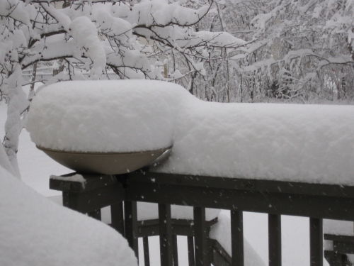 Snowy backyard. The bird bath was not on, if it had been, the snow would not have been piled so high.